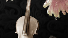 The Biology of Violins